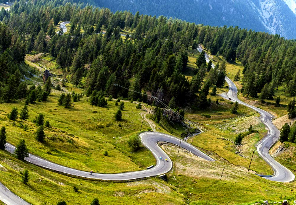 roadtrip-to-paradise-trees.jpg