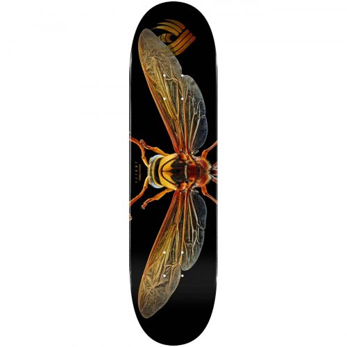 "Powell Peralta Flight® Skateboard Deck BISS Potter Wasp Shape 247 8.0"" Canada Online Sales Vancouver Pickup Warehouse Distributor"